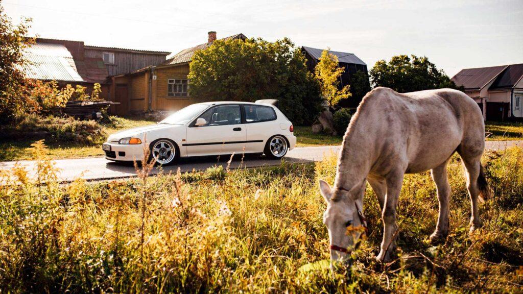 Honda Civic – Creamyeg